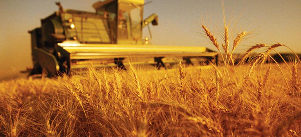 Улаанбуудайн тонн тутамд 50-60 мянган төгрөгийн урамшуулал олгоно
